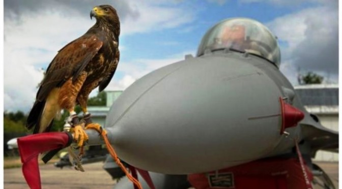 Falke, flieg du voran