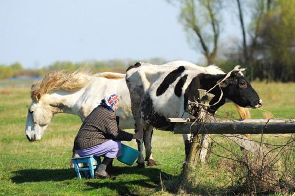 Rosja sankcje koń krowa